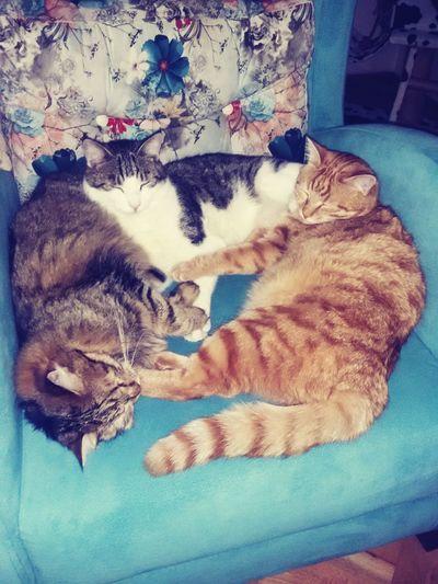 Kedidir Kedi ❤ bakmayın öyle! En az üç kedi 😸😻😽 🏠
