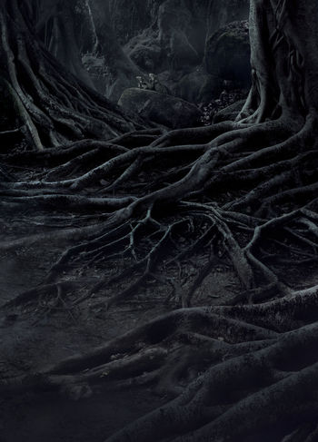 creepy trees with twisted roots and two lizard on misty night forest. Scary concept. Dark Evil Fear Halloween Horror Moon Tree Wood Abstract Backgrounds Blackandwhite Close-up Complexity Crows Dangerous Day Dead Evening Forest Full Frame Indoors  Mist Mood Moonlight Mystery Nature Night Nightmare No People Pattern Roots Of Tree Scary Shadow Spooky Textured