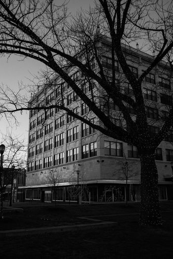 Heers building Christmas Lights Christmastime Winter Collection Architecture_collection Architecture Springfieldmo Springfield Springfield, MO Architecture Building Exterior Built Structure Tree Outdoors Day City No People