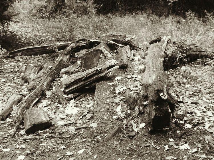 Fallen Tree! Wood Fallen Tree Nature Beauty In Nature EyeEm EyeEm Nature Lover EyeEm Best Shots EyeEm Selects Wildlife & Nature Sepia High Angle View Close-up Ground