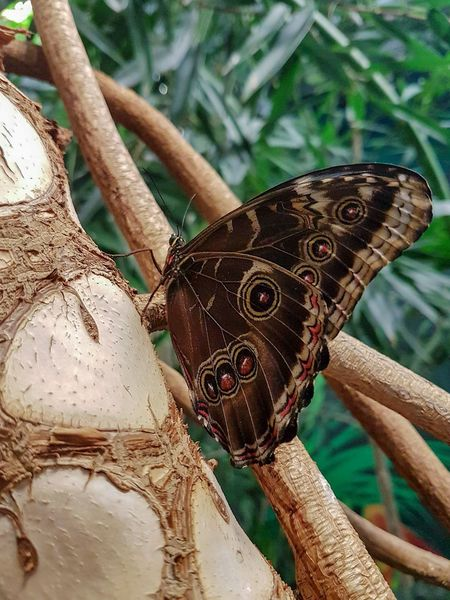 Butterfly on tree Beauty In Nature Butterfly Garden Butterfly House Tourist Destination Tourist Attraction  Genoa Aquarium Animal Themes Lepidópteros Travel Destinations Nature Butterfly Butterfly On Tree