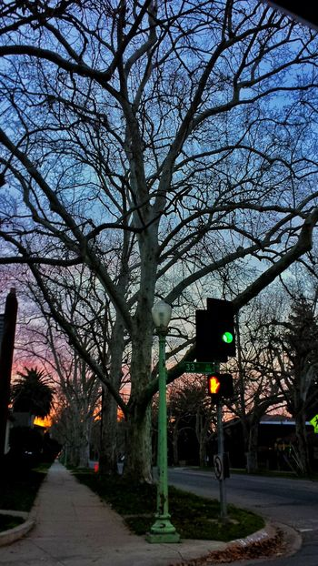 Check This Out Eyeem Photography Check This Out Sacramento Sunrise Spooky Trees Sky Porn Hugging A Tree Tree_collection  TreePorn Walking Alone... Relaxing Hello World Enjoying Life