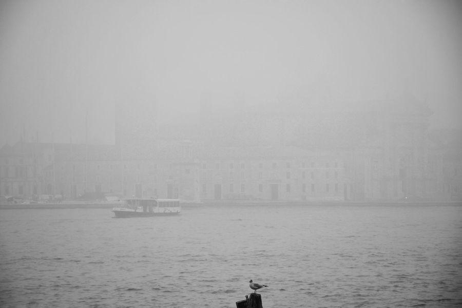 Blackandwhite Streetphotography Bird Canal Venice City Nautical Vessel Sea Water Fog Urban Skyline Photography Themes Photograph Smog Sky