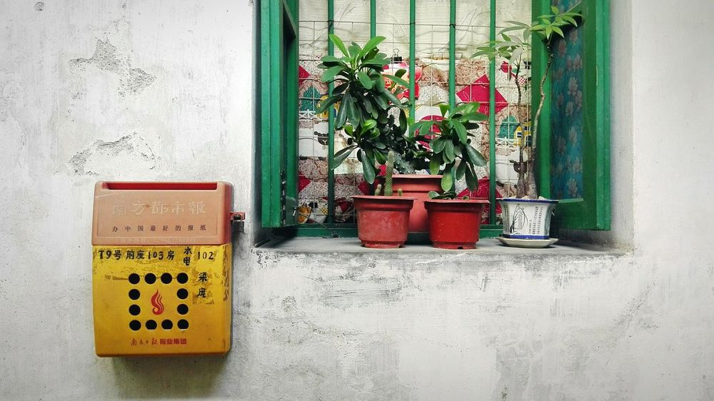 walking around the old area of my living city..Through The Window Plants 🌱 Window View My Smartphone Life Old House Enjoying The View EyeEm Nature Lover White Wall Relaxing 小清新