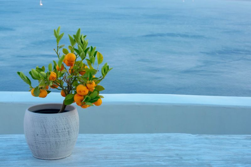 EyEmNewHere Nature Fruit Flower Flowering Plant Plant Nature Vase Freshness Beauty In Nature No People Table Water Flower Arrangement Blue Flower Head Arrangement Still Life Outdoors Growth Focus On Foreground Copy Space Bunch Of Flowers Capture Tomorrow