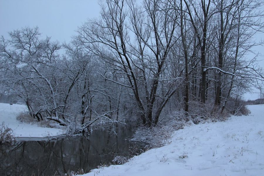 beautiful snow cover in our back yard, just in time for Christmas Creek Bare Tree Beauty In Nature Branch Cold Temperature Day Dusk In The Country Landscape Nature No People Outdoors Scenics Sky Snow Snowy Creek Tranquility Tree Water Winter