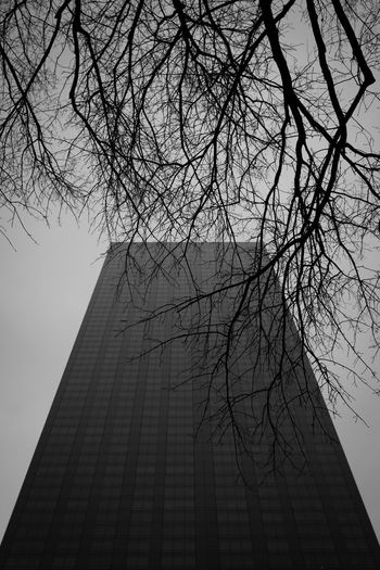 Sinister looking Trump Tower seen behind bare tree branches in Manhattan, New York City, New York, USA. Architectural Feature Architecture Bare Tree Black And White Black And White Photography Blackandwhite Blackandwhite Photography Branch Built Structure City Low Angle View Manhattan Modern New York New York City No People Outdoors Tall - High Travel Destinations Tree Trump Tower