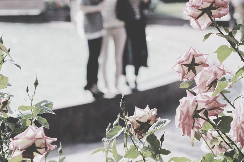 EyeEm Best Shots ミッションのアルバムはいいね来ない関係ない Flowers 給料日前はお金ない関係ない 誰か! EyeEm Nature Lover Eye4photography  しつこいと嫌われる The Moment - 2015 EyeEm Awards Holiday POV