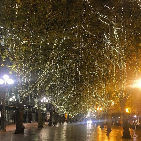 Illuminated Street Light Tree Pioneer Square, Seattle Decoration City Life Seattle