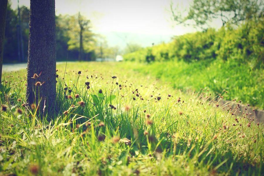 春の日差しの中で。 春 草花 憩い