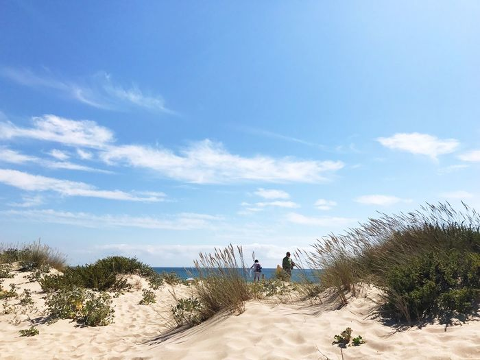 Sand Beach Nature Day Tranquil Scene Sky Sunlight Scenics Tranquility Beauty In Nature Outdoors Cloud - Sky Marram Grass Blue Vacations Sea Sand Dune Tree