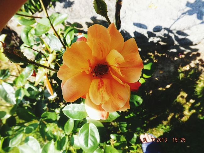 Summer Check This Out Nature Flowers