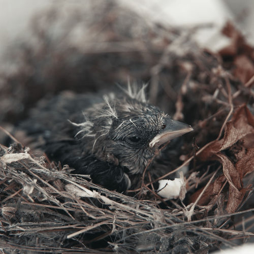 High angle view of young bird in nest