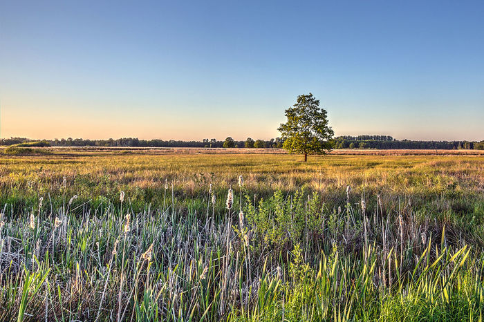 HDR Torfmoor Beauty In Nature Bluesky Clear Sky Field Grass Hille Land Landscape Moor  Nature No People Non-urban Scene Ostwestfalen Plant Sky Tranquil Scene Tranquility Tree EyeEmNewHere