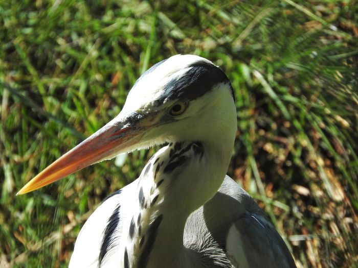 Mediterranean Sea Camargue♥ France🇫🇷 Saintes-Maries-de-la-Mer Uccelli Nature