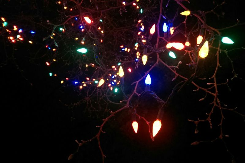 Check This Out, Christmas Lights at a Lightshow