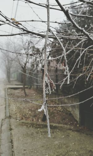 Frost Forsty No People Bare Tree Nature Day Cold Temperature Beauty In Nature Cold Huawei P9 December