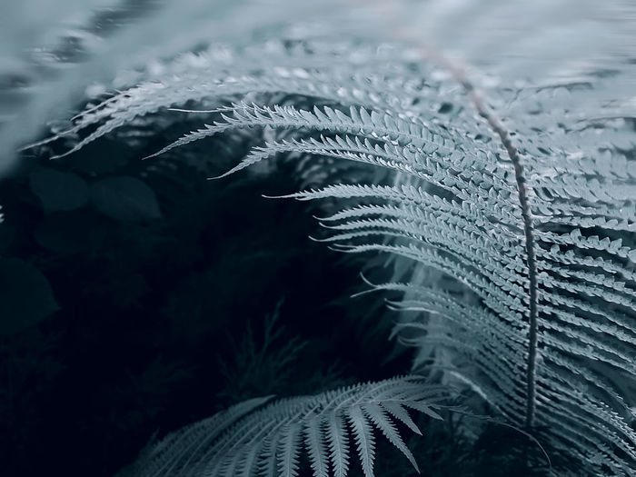 Closeup on fern leaf in the forest
