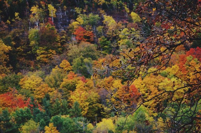 Last week on my way to Cooperstown.. Upstate NY Foliage God's Beauty Drivebyphotography Eye Em Nature Lover