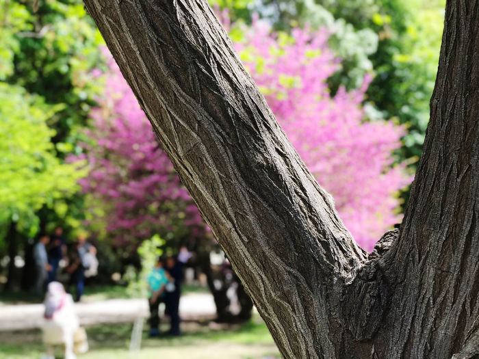 Close-up of pink flower tree in park