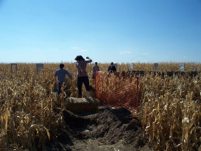 Corn Corn Maze Day Fall Fun Friends Maze Runner Nature Outdoors Real People