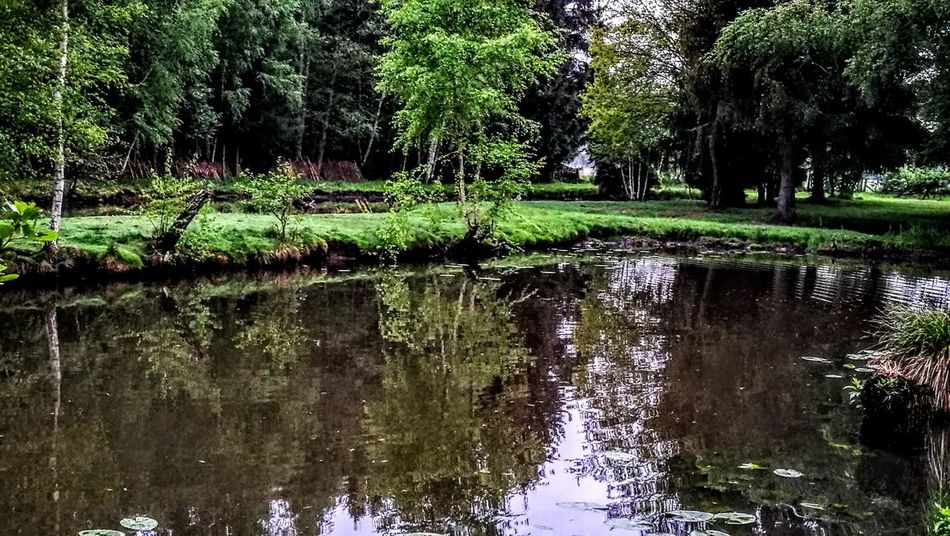 A little bit Paradise on Earth...Nature for touching... Reflection Water Nature Outdoors Lake Beauty In Nature Tranquility Original Picture Wendland GetbetterwithAlex Beauty In Nature