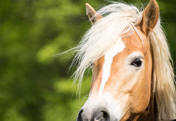 horse Animal Head  Animal Themes Close-up Day Domestic Animals Focus On Foreground Horse Livestock Mammal Mane Nature No People One Animal Outdoors Pets Portrait