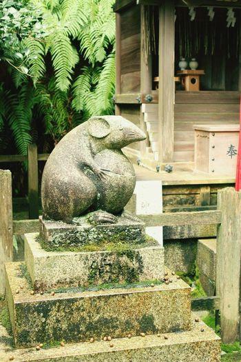 No People Animal Themes Komanezumi One Animal Kyoto,japan Ohtoyojinjya First Eyeem Photo EyeEmNewHere