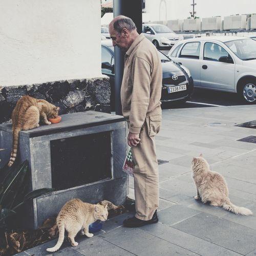 Portrait of cat sitting on ground