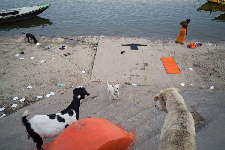 Varanasi 2017 India Animal Themes Animal Wildlife Animals In The Wild Day Dog High Angle View Lake Mammal Nature Orange Color Outdoors Real People River Standing Streetphotography Varanasi Water