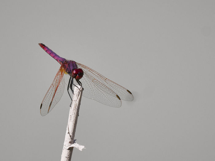 Low angle view of dragonfly on pole against sky