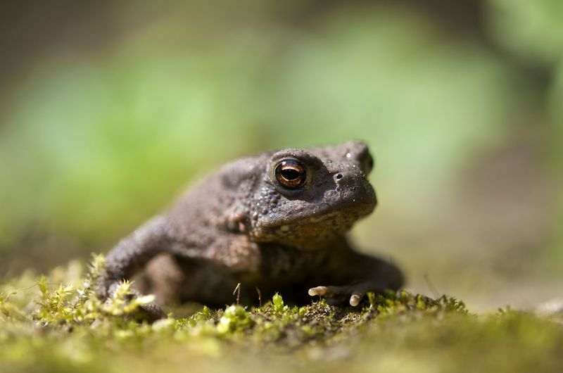 Close-up of toad on field