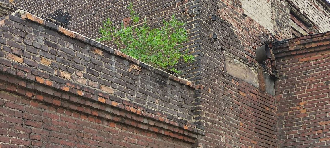 Low angle view of weathered wall of old building
