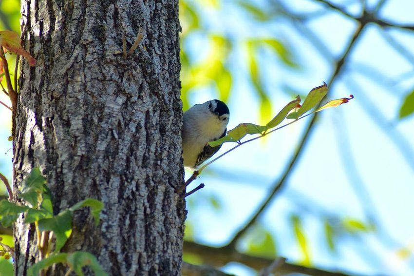 Hey buddy Bird Wood Pecker Little Bird Watching Me Wildlife Wildlife & Nature Nature Nature_collection Wildlife Photography