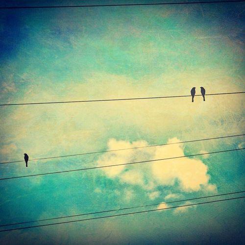 Cloud Mix_rainy Bird Morning Blue_sky .