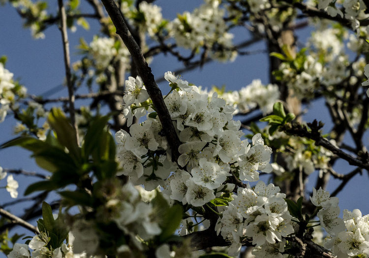 Low angle view of fresh flower tree against sky