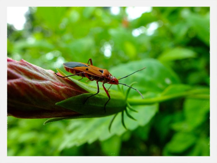 An insect on