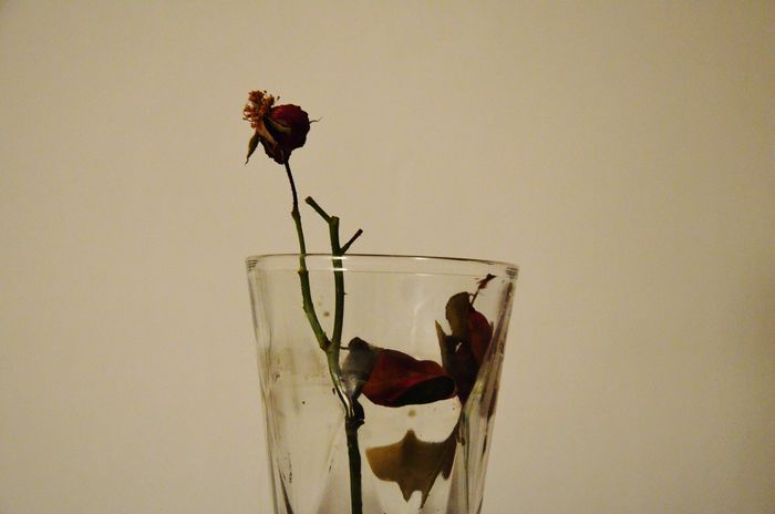 Dead Rose Emotions In A Picture Rose In A Glass Close-up