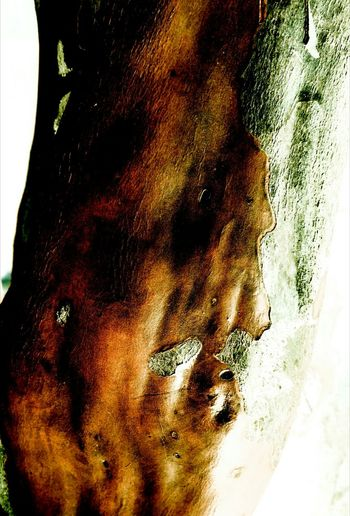 Close-up Almosthuman Male Likeness Tree Sculptedbynature