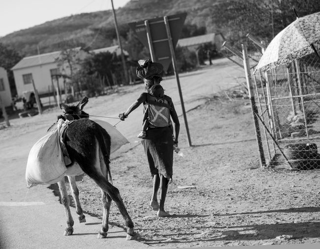 Adults Only Africa African Animal Themes Donkey Life Lifestyle Namibia One Animal One Person Working Animal