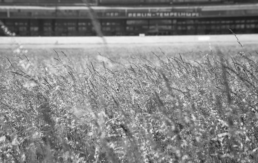 urban nature... Abandoned Abondoned Places Airfield Airport Airportphotography Berlin Berlin Tempelhof Berliner Ansichten Blackandwhite Blurry Background Close-up EyeEm Best Shots - Black + White Field Focus On Foreground Full Frame Grass Lostplace Lostplaces Monochrome Open Edit Schwarzweiß Selective Focus Stillgelegt Tempelhofer Feld Urban Nature