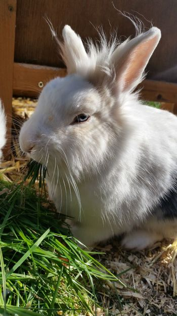 Rabbits Rabbit Rabbits 🐇 Pets Cute Animal One Animal