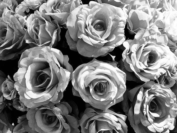 Black And White Black And White Photography Black And White Collection  Black And White Rose Black And White Flower Close Up Close Up Photography Close Up Collection Close Up Rose Close Up Flower Close Up Flowers Roses Rose Flower Flower