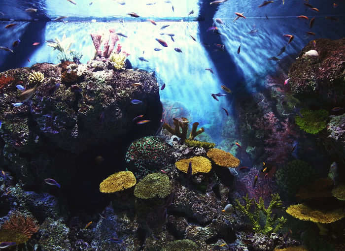 Beautiful sight of colorful fishes in SEA Aquarium, Singapore Corals Fish Marine Life Sealifeaquarium Underwater UnderSea Marinelife Coral Colorful Aquatic Sea Life Singapore S.e.a Aquarium Colour Of Life Color Palette Eyeemphoto
