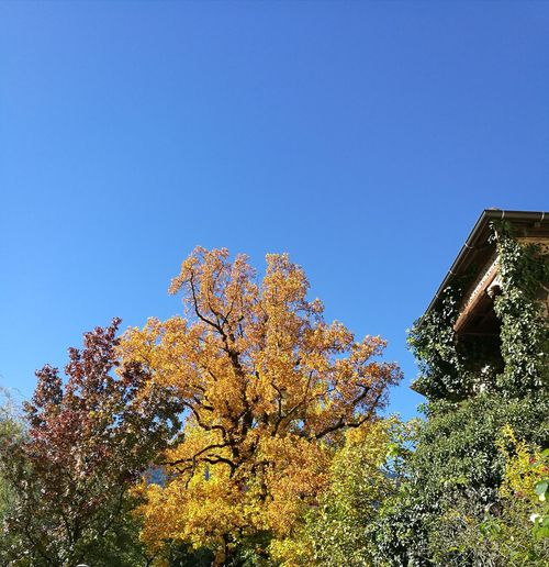 Outdoors Beautiful Nature Amazing Autumn Colors Niceweathertoday Blue Sky Leaves🌿 Colourfulleaves Trees And Sky Enjoying Nature Hometownlove  Southtyrol  Enjoing The Moment No People Justapicture HuaweiP9Photography Notprofessional Just A Hobby