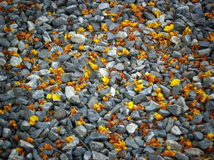 Autumn leaves on field