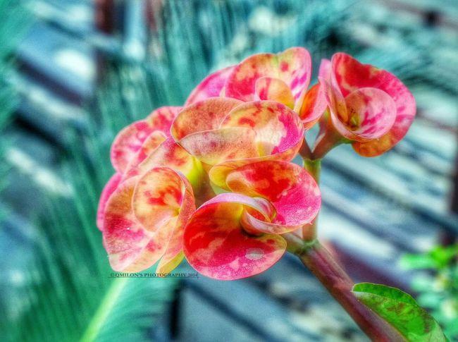 ?? this is my present for u, My Dear Friends!!! ?? Taking Photos Flower_Collection EyeEm Best Shots EyeEm Best Edits