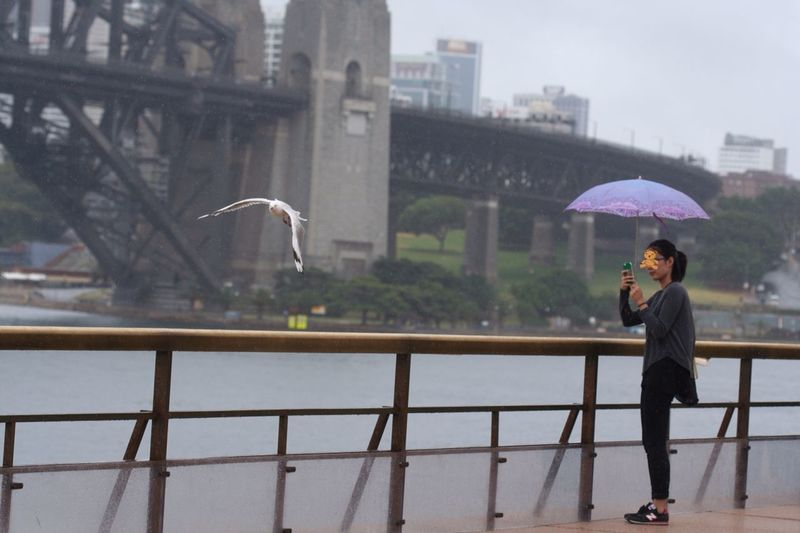 Umbrella series: flying zone Sydney Rainy Days EyeEm Best Shots Taking Photos Peace And Quiet Gull Harbour Peaceful Throwback Bridge