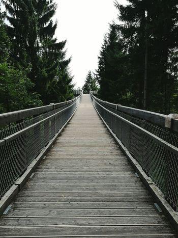 Suspendedbridge Footbridge The Way Forward Tree Nature Germany
