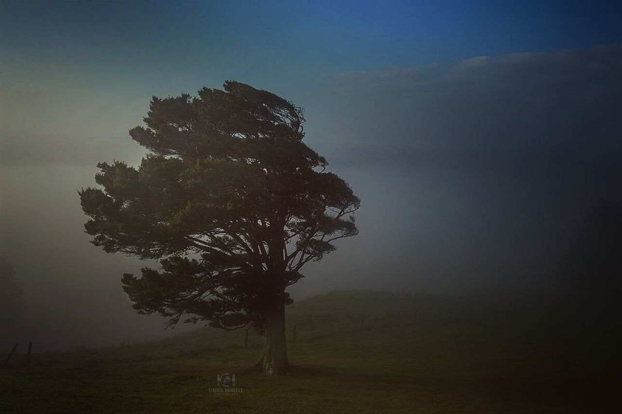 tree, landscape, solitude, beauty in nature, tranquil scene, tranquility, fog, nature, grass, night, tree trunk, scenics, outdoors, no people, illuminated, sky, tree area